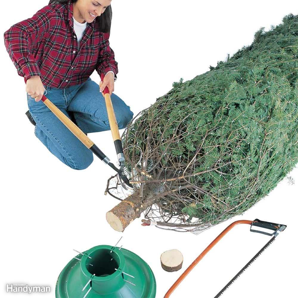 Christmas Tree Basics