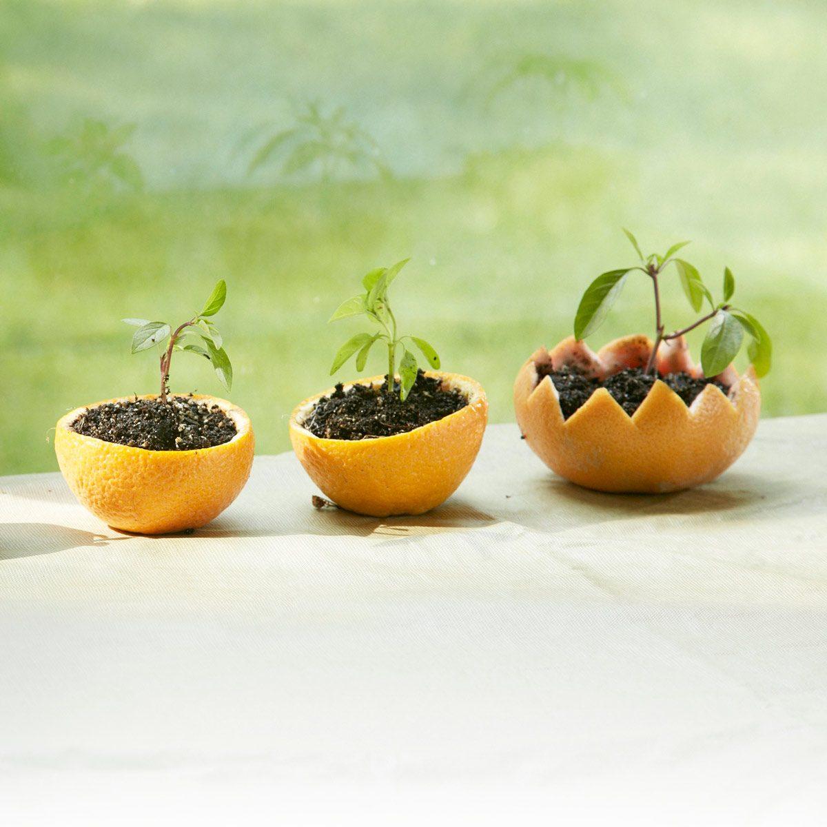 Citrus Rind Seed Starters