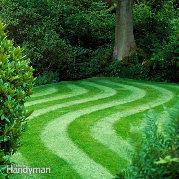 Barefoot Lawn