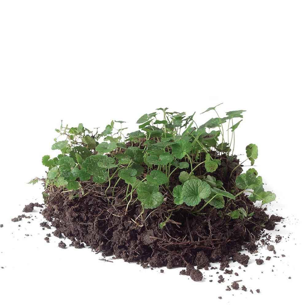 How to grow greener grass magic bullet # 2. Attack broadleaf weeds in mild weather