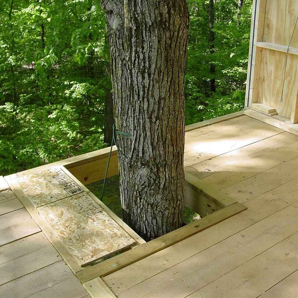 DIY Treehouse Building Tip 3: Don't Restrict Tree Growth