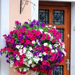Pretty Hanging Planter Ideas