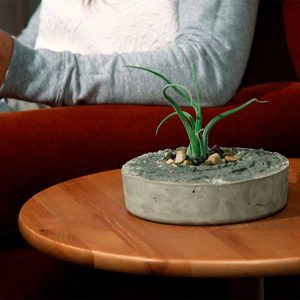 Concrete Air Plant Planter