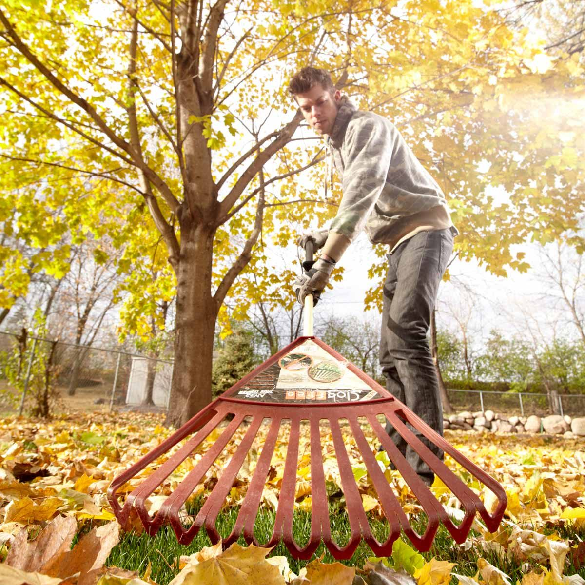 "Myth: ""If I don't rake my leaves, they'll smother my lawn."""