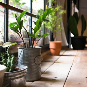 14 Tips For Bringing Plants Inside and Caring for Them Through Winter