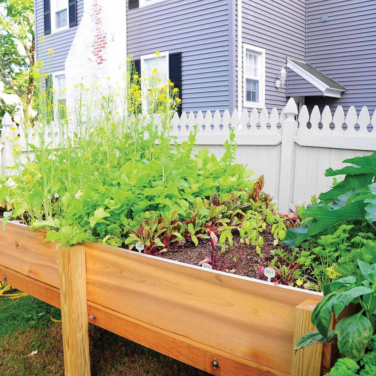 Elevated Vegetable Garden Planter