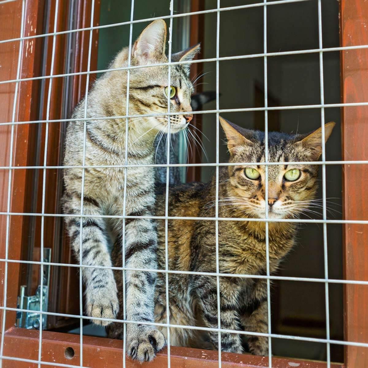 Cat Furniture: Cat Solarium