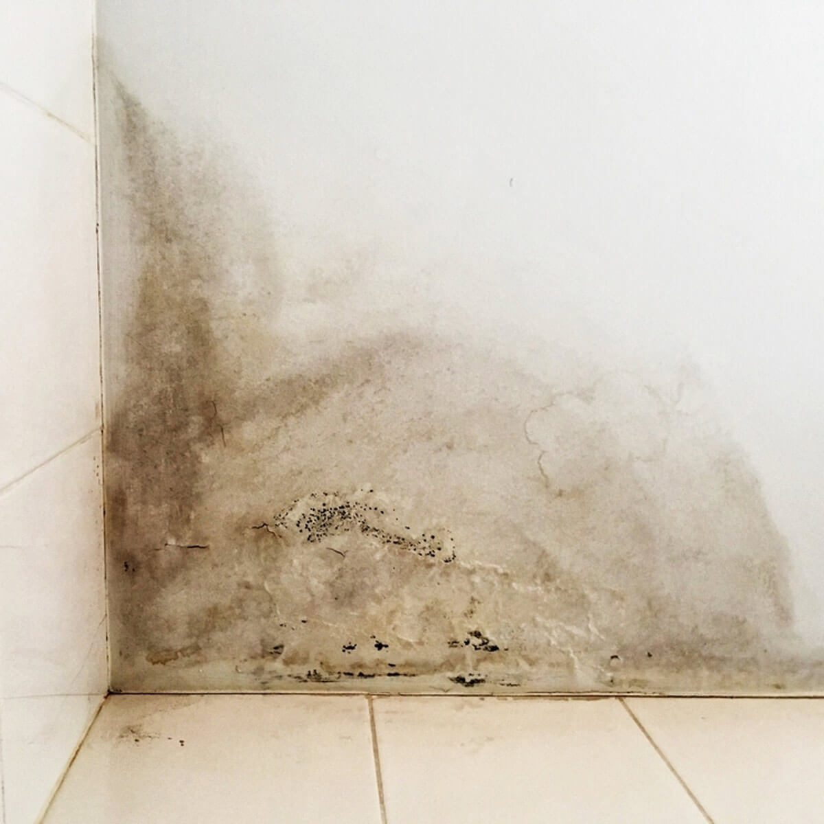Inspect for Serious Issues like Mold