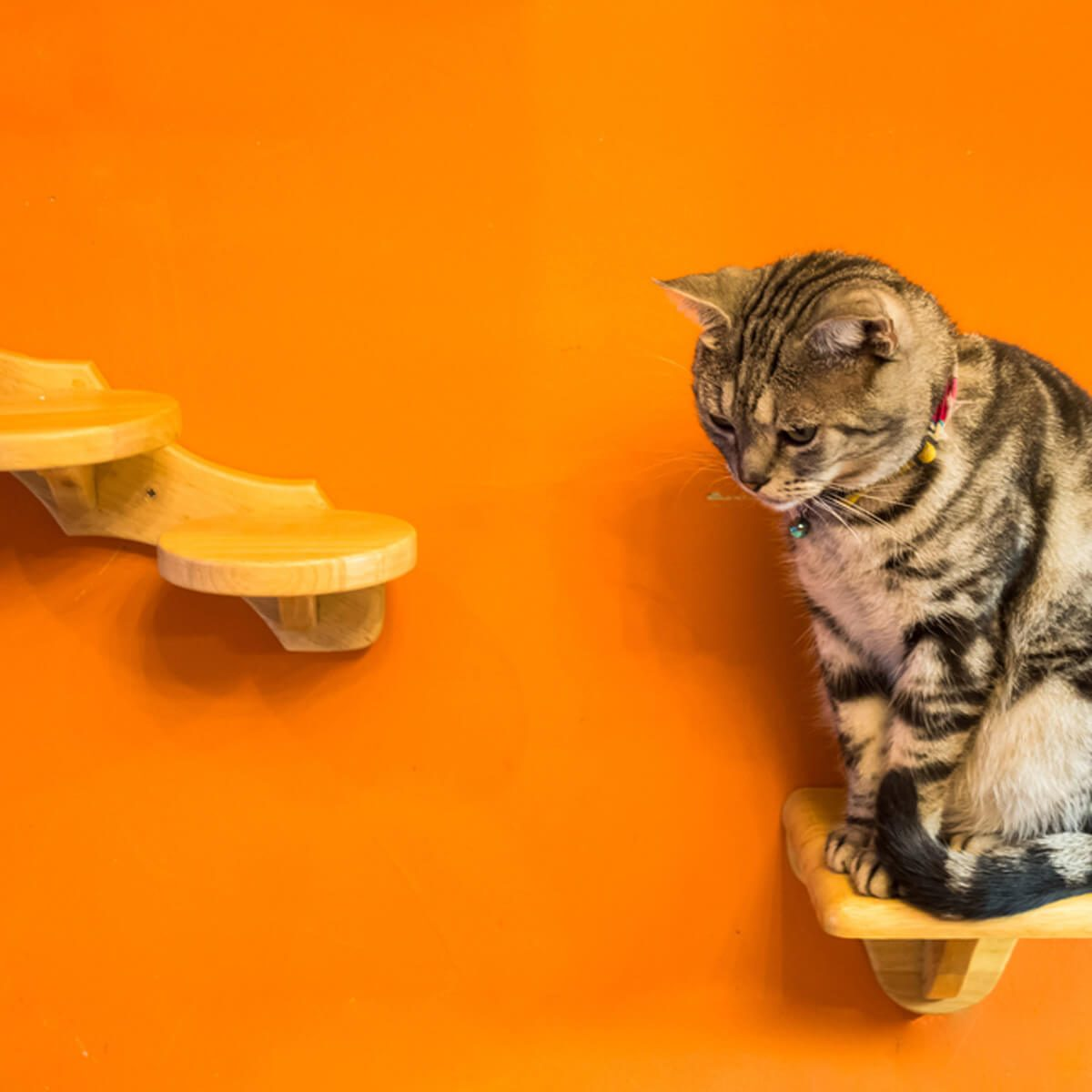 Cat Furniture: Shelves and Pegs for Cat Steps