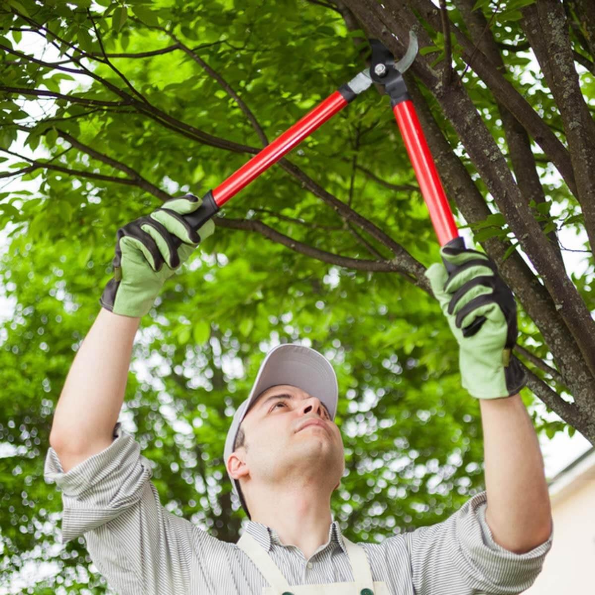 Get Pruning