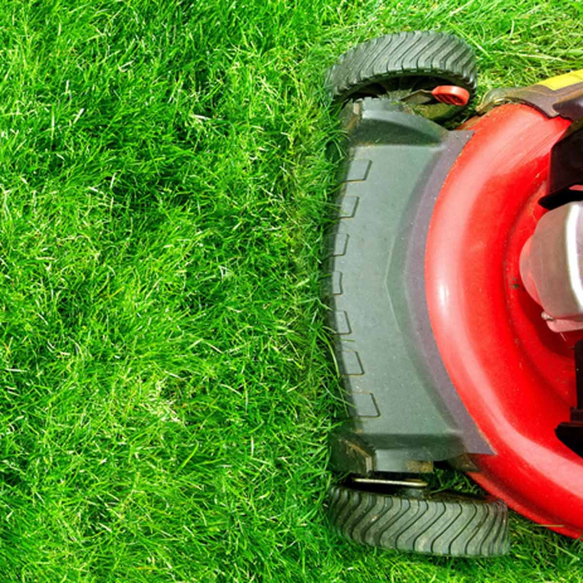 "Myth: ""If I leave grass clippings on the lawn, it could lead to thatch build-up."""