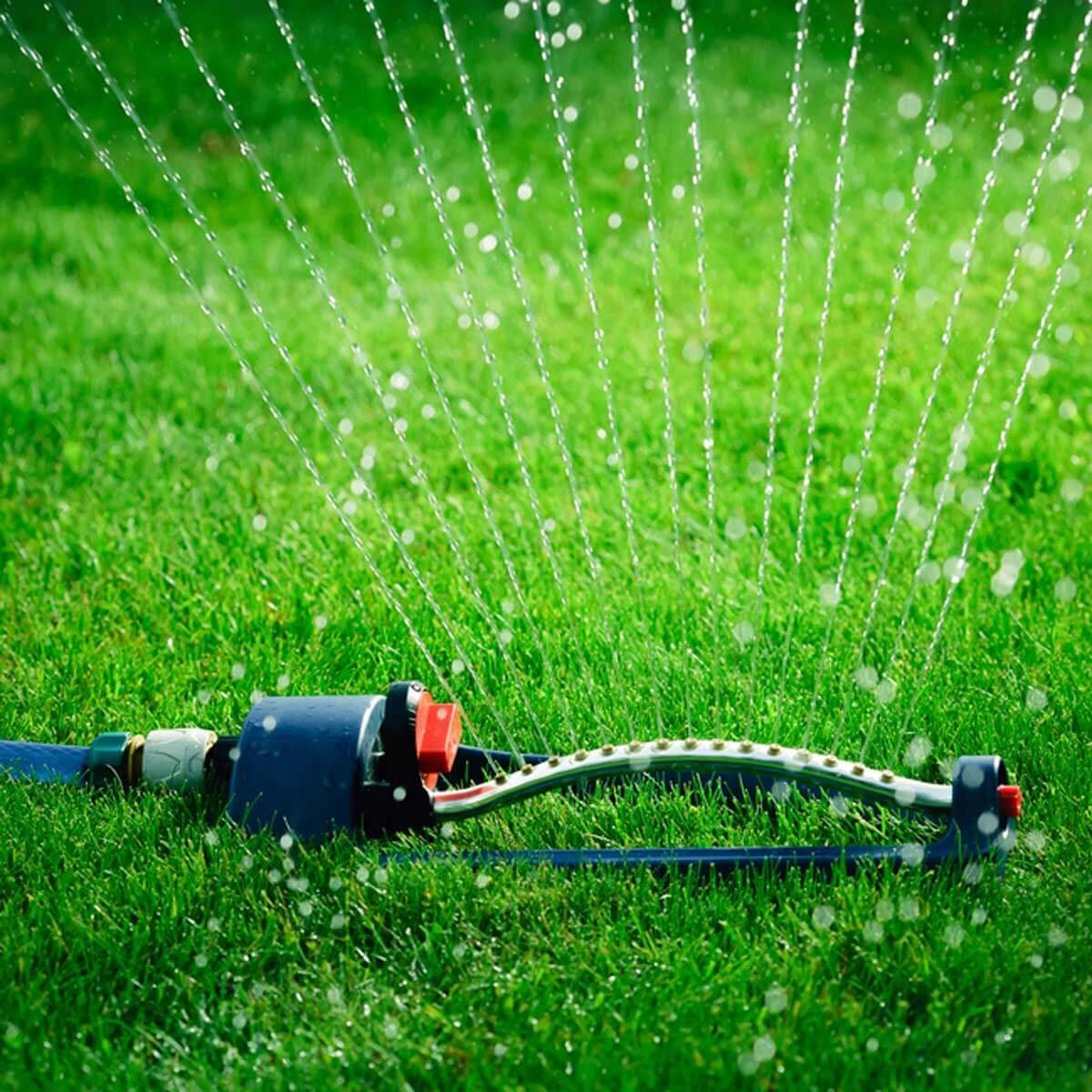 "Myth: ""Watering in the evening is best."""