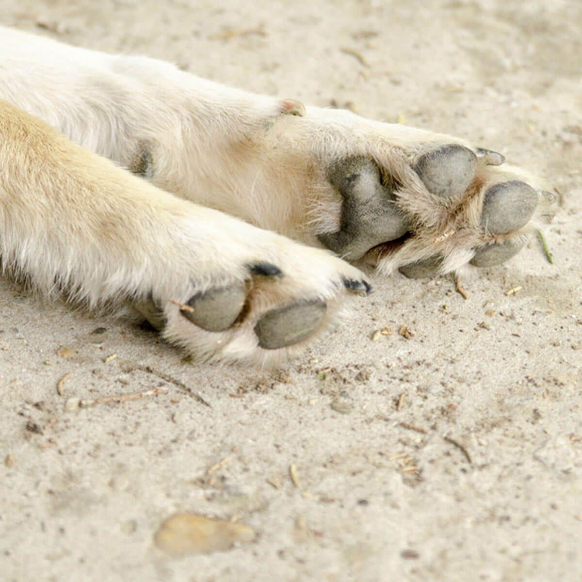 Keep Paws Clean