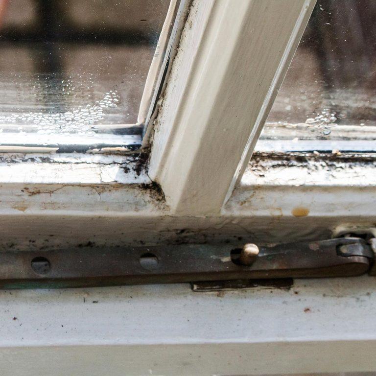 mold condensation on window cil