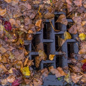 11 Things You Should NOT Do With Your Fallen Leaves
