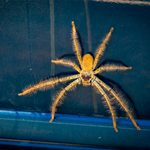 How to Quickly Get Rid of Spiders In Your Car
