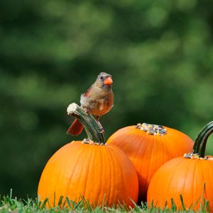 10 Things You Can Do With a Jack-O-Lantern After Halloween