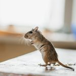 Heres How to Keep Mice Out of Your Kitchen