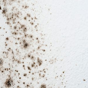 How to Get Rid of Mold on Bathroom Walls