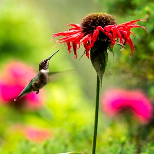 Here's the Best Time to Put Out Your Hummingbird Feeder
