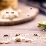 How to Get Rid of Ants in Your House and Yard