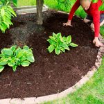 Gardening Tips for Brown Thumbs