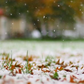 First snow frost on fallen leaves grass