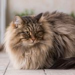 8 Pets to Get If Youre Allergic to Cats and Dogs