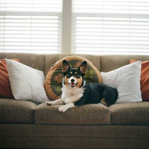 8 Ways to Get That Dog Smell Out of the Couch