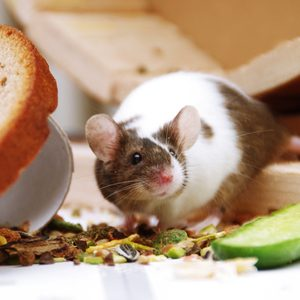 How to Keep Mice and Other Pests Out of Your Home
