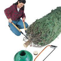 trimming christmas tree