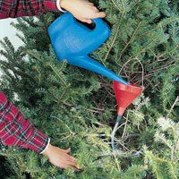 watering christmas tree