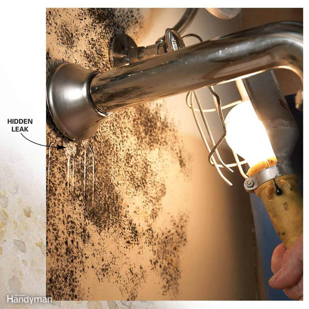 How to Test for Mold