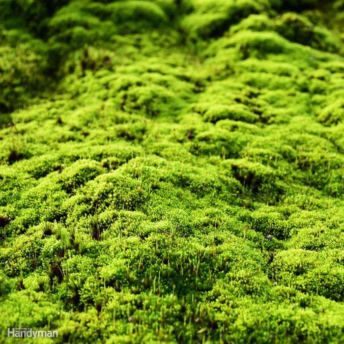 Ground Cover Alternatives to Grass: Moss