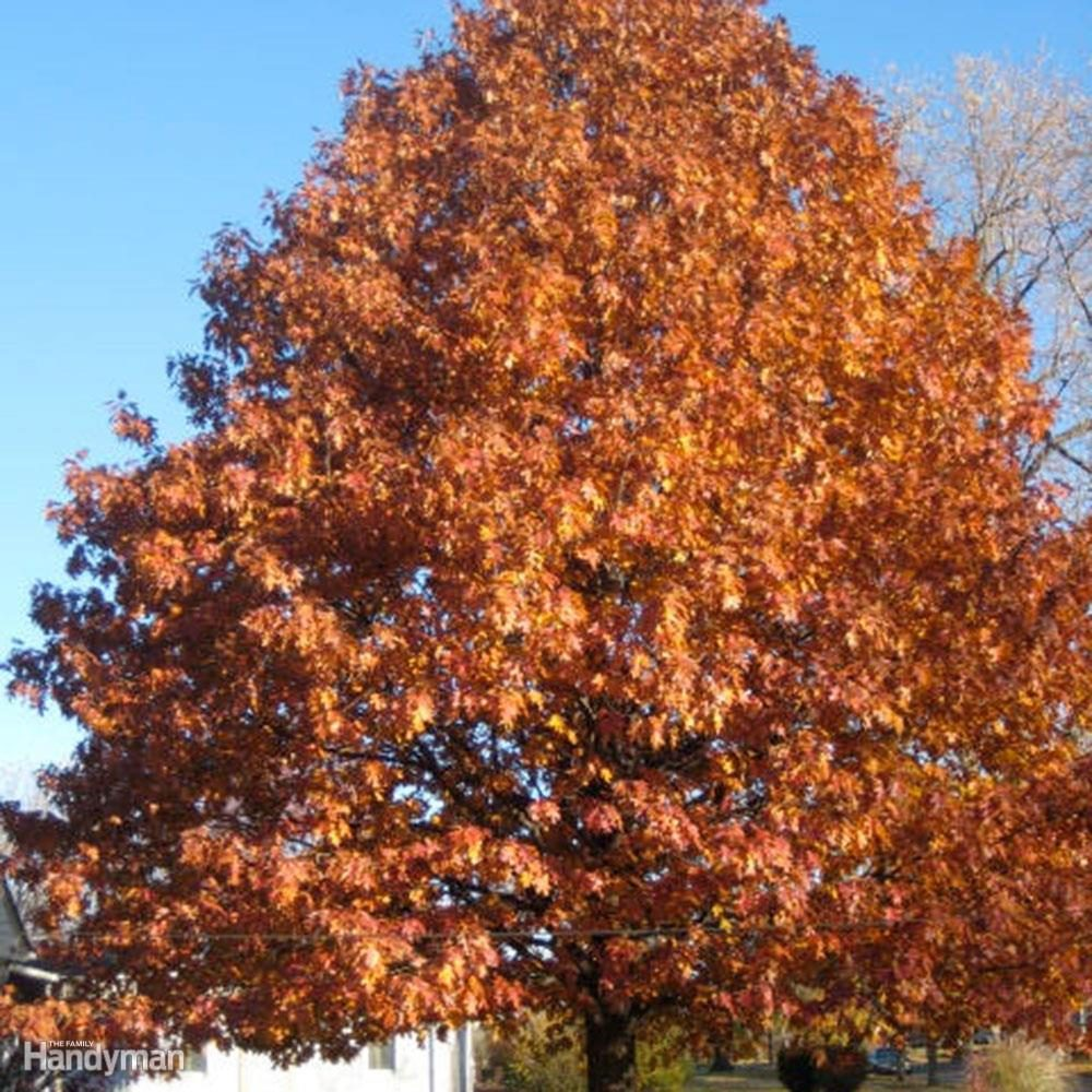 DFH17APR058-_red-oak