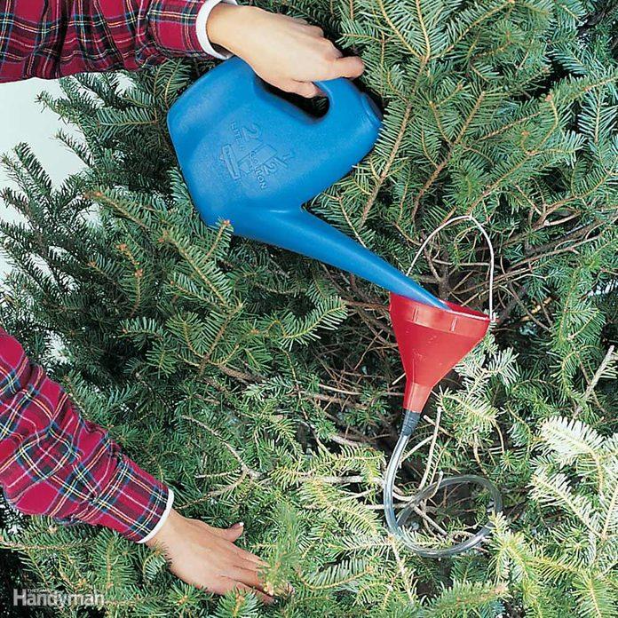 Christmas tree watering