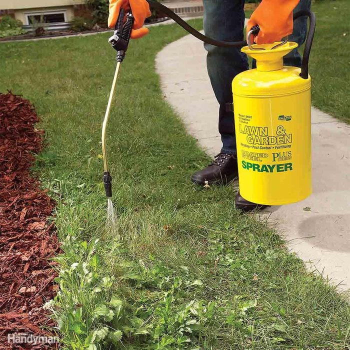 Treat Weed Patches With a Small Tank Sprayer