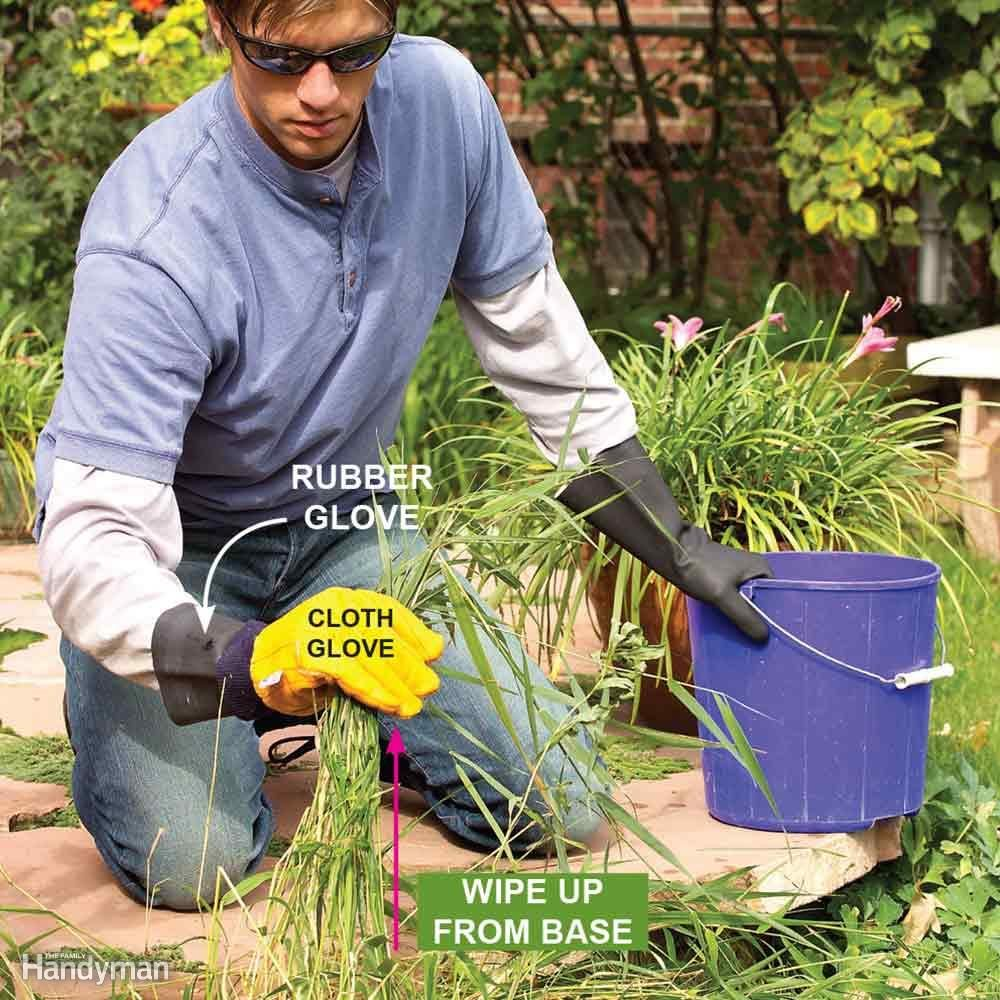 Kill Perennial Grassy Weeds One By One