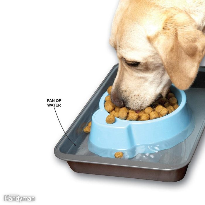 Ant-Proof Pet Food Dishes