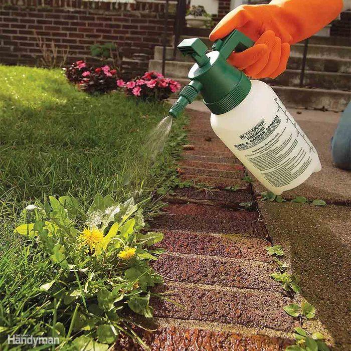 Kill Broadleaf Weeds: Late Season