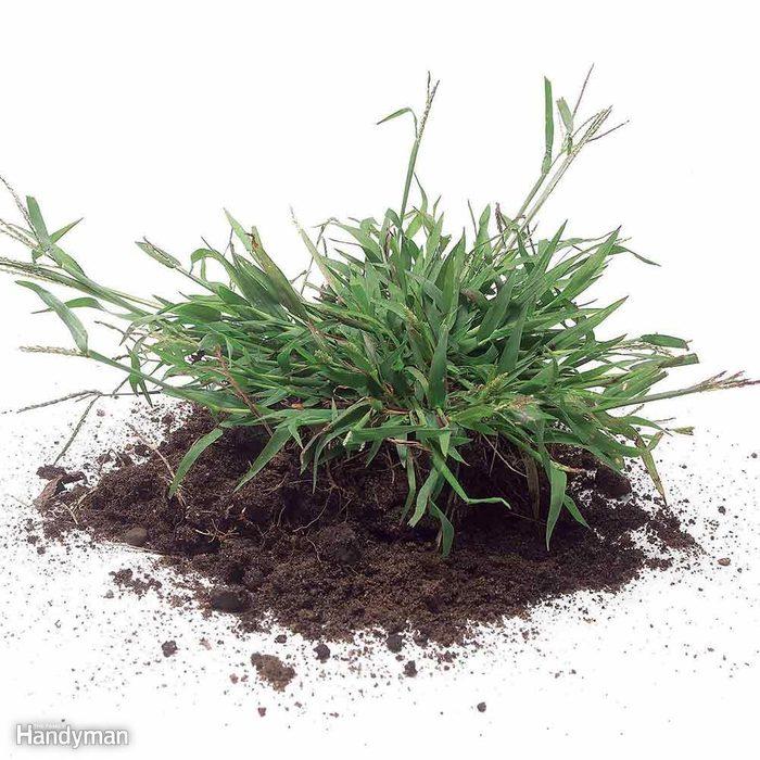 Kill Annual Grassy Weeds: Early Season