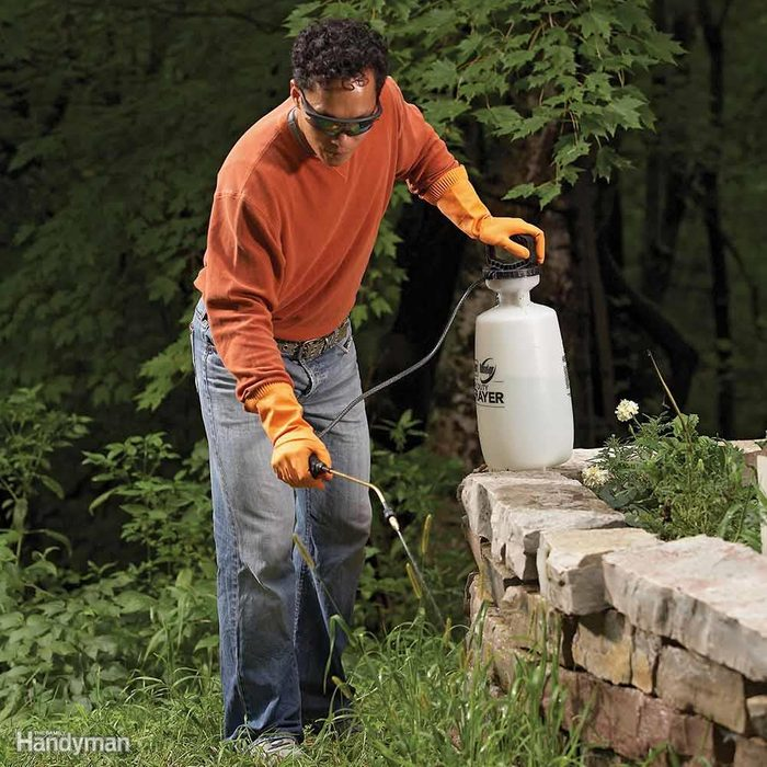 Kill Perennial Grassy Weeds: Too Late