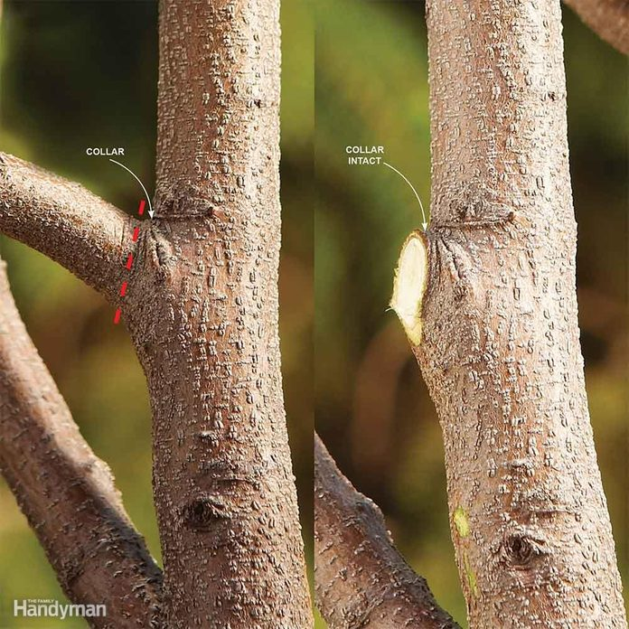 Cut a Branch at the Collar