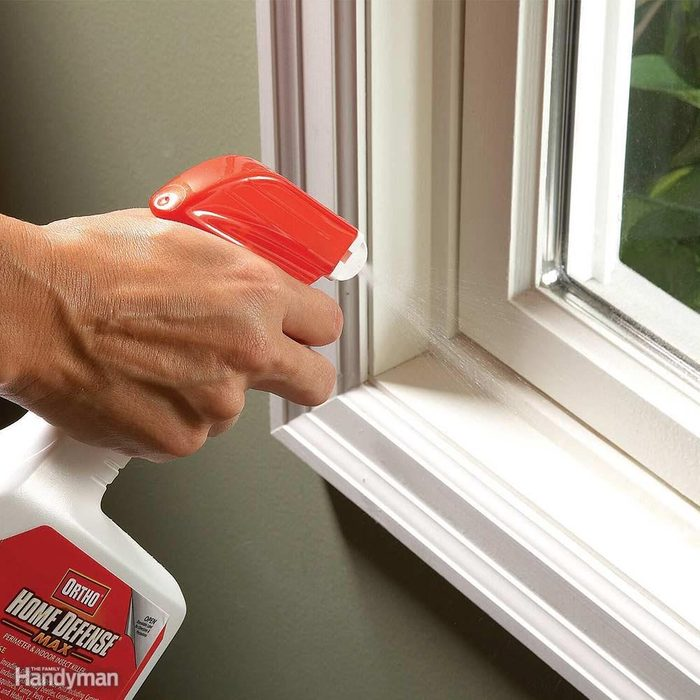 Ant Prevention: Spray Ant Entry Points