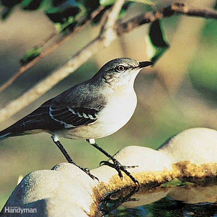 Ideas for Clean Birdbaths