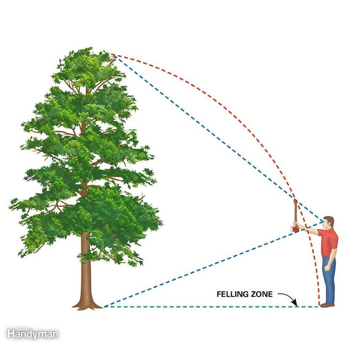 Estimate the Felling Zone: How to fell a tree in the direction you want