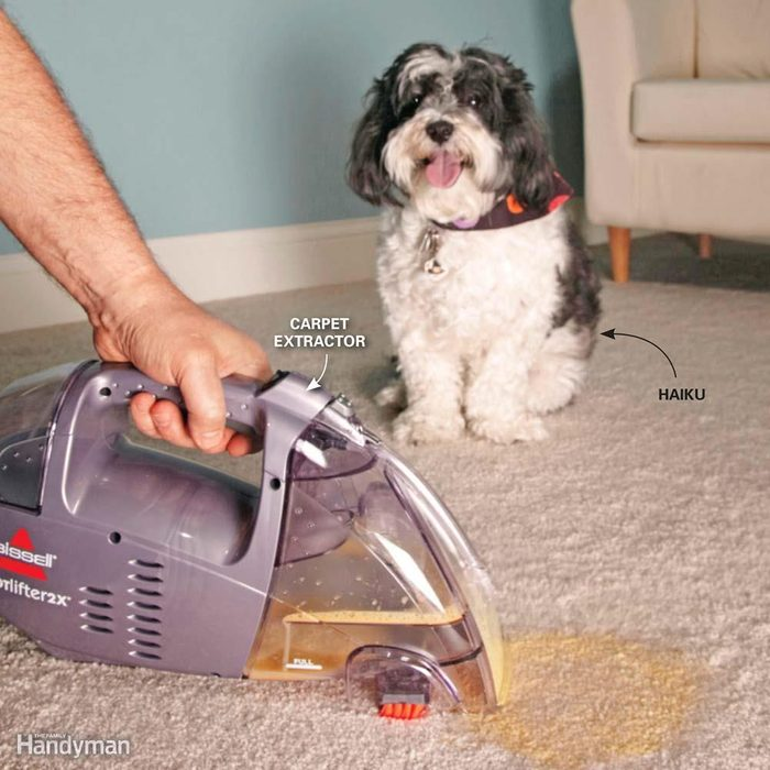 A Tool for Frequent Pet Accidents