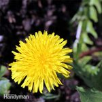 Natural Ways to Kill Weeds and Get Them Out Of Your Garden