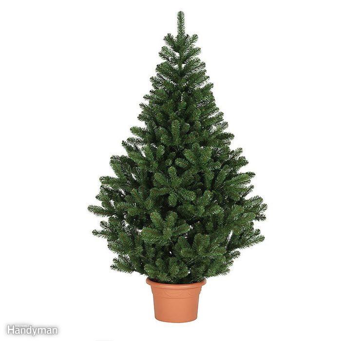 Should You Plant a Live Christmas Tree?