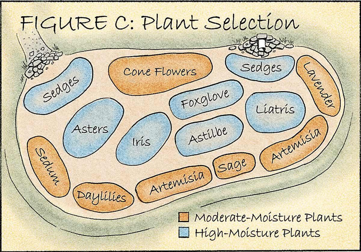 plant selection rain garden